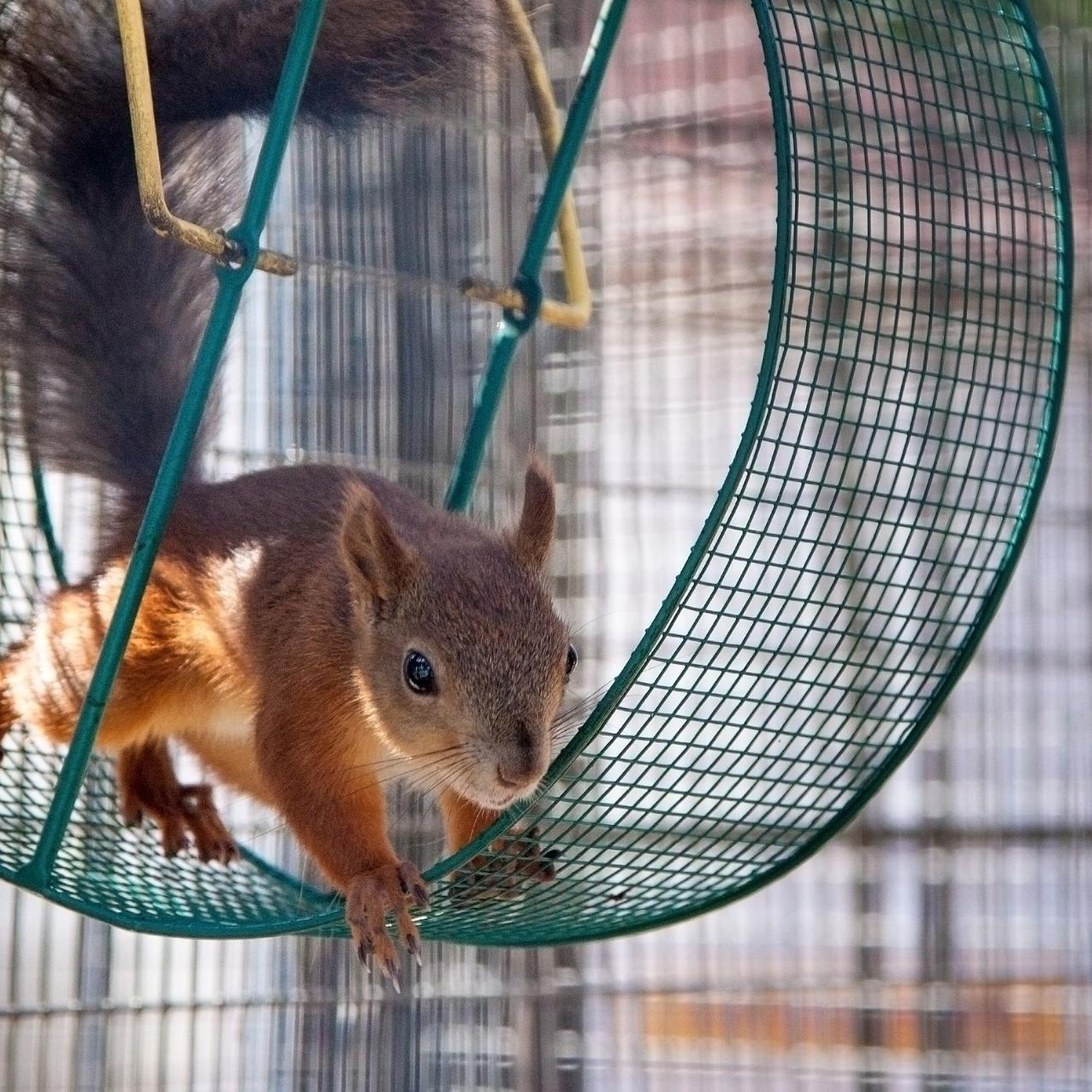 Juoksetko aamusta iltaan oravan pyörässä
